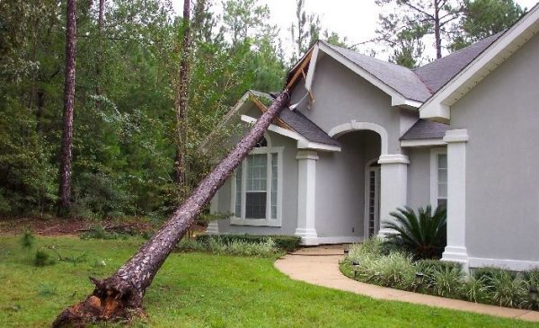 Tree on House Front S